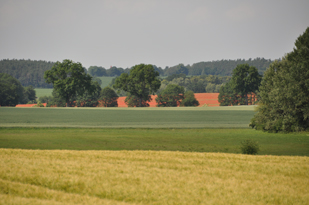 Feld in Suckwitz